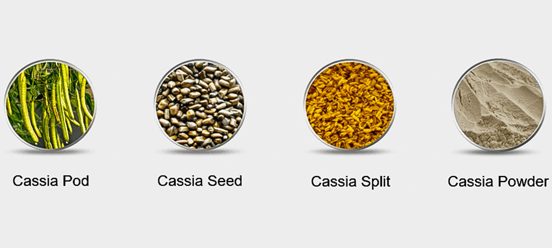 What is Cassia?